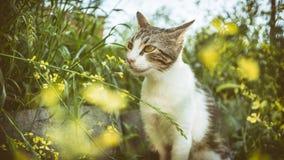 Bête perdue Cat Standing Between Flowers images libres de droits