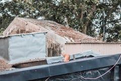 Bête perdue sur le toit images stock