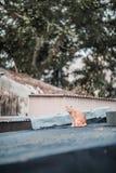 Bête perdue sur le toit photo stock