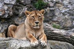 Bêtes de reine Photo libre de droits