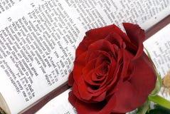 A Bíblia e Rosa 3 fotografia de stock