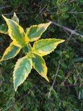 Bóg dać Żółtemu konturowi Zielony liść zdjęcia royalty free