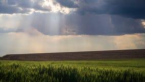 Bóg promienie w Palouse późnym popołudniu Fotografia Stock