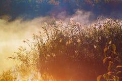 Bóg promienieje - iglastego las w ranku wcześnie Zdjęcie Stock