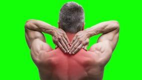 Ból w szyi, starszy mięśniowy mężczyzna z backache na zielonym tle, chroma kluczowy 4K wideo zdjęcie wideo