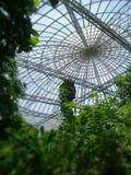 Bóveda del jardín y del Insectarium de la mariposa de Bangkok fotos de archivo