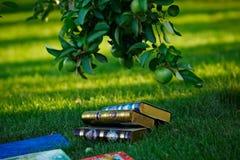 Böcker på en gräsmatta royaltyfri foto