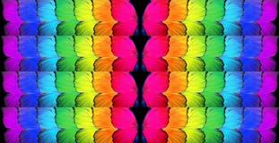 Bögen sjunker Färger av regnbågen Modell av den mångfärgade fjärilsmorphoen, royaltyfri fotografi