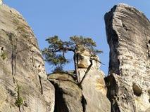 Böhmisches Paradies - Felsen Stockbilder