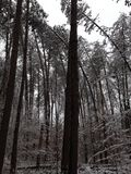 Böjande träd Royaltyfri Foto
