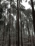 Böjande träd Arkivbilder