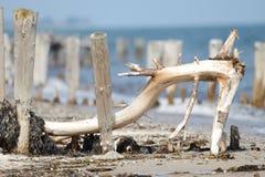 Böjd filial på stranden Royaltyfria Bilder