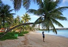 böjd kokosnötguam tree Fotografering för Bildbyråer