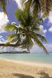 böjd kokosnötguam tree Royaltyfri Fotografi