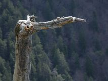 böjd ojämn tree Royaltyfri Fotografi