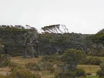 böjda trees arkivbilder