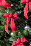 böjer vintergrön stor red Arkivbild
