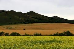 Bölja vetefältet arkivbild