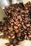 bönakaffe Royaltyfria Bilder