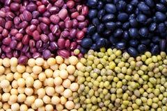 bönamung soybean Royaltyfri Bild