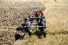 Bönder från Ambohitrarivo, Madagascar Arkivfoto