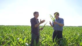 Bönder i ett fält av havre stock video
