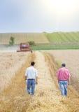 Bönder i vetefält under skörd royaltyfria bilder