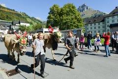 Bönder med en flock av kor på den årliga transhumancen på Engelb Royaltyfria Bilder