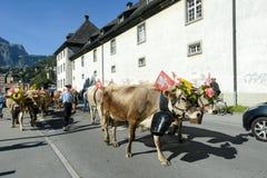 Bönder med en flock av kor på den årliga transhumancen på Engelb Arkivbilder