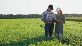 Bönder med minnestavlaarbete i ett kikärtfält stock video