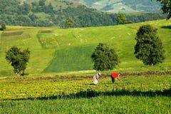 Bönder på arbete som arbetar med plogen på fältet royaltyfria bilder