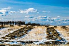 Bönder sätter in, cowboyen Trail, Alberta, Kanada Royaltyfri Foto