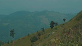 Bönder som arbetar på kålfälten i Chiang Rai område lager videofilmer