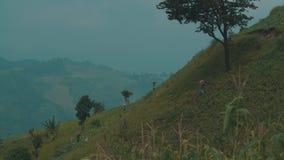 Bönder som arbetar på kålfälten i Chiang Rai område arkivfilmer