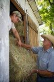 Bönder som laddar hö in i ladugård Arkivfoton