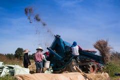 Bönder som tröskar ris Arkivfoton