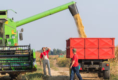 Bönder undersöker sojabönan i släp efter skörd arkivbilder