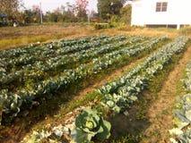 Bönder växer grönsaker arkivfoto