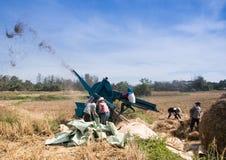 Bönderna som skördar ris Royaltyfri Foto