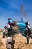 Bönderna som skördar ris Royaltyfria Bilder