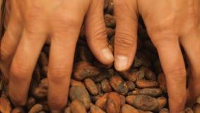 Bönor för framställning av choklad på julefterrättnedgången från gömma i handflatan i ultrarapid lager videofilmer