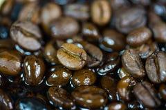 bönor frukosterar ideal isolerad makro för kaffe över white makro studio, böna, natur Royaltyfria Foton