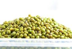 bönor gröna mung Arkivbilder