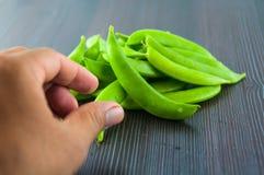 Bönor haricot vert, ärtor, morot, lagade mat haricot vert, radbönor, sparris, snittharicot vert, havre, grönsaker, brocco Royaltyfria Foton