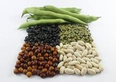 Bönor i olika färger Royaltyfri Bild