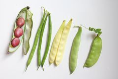 Bönor och legumes Royaltyfria Foton