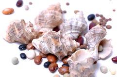 bönor som lagar mat skalet arkivfoto