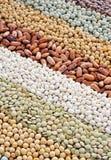 bönor torkade soybeans för linblandningsärtor Arkivbild