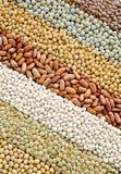 bönor torkade soybeans för linblandningsärtor Royaltyfria Foton