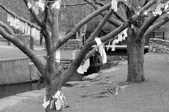Bönträd Royaltyfria Bilder